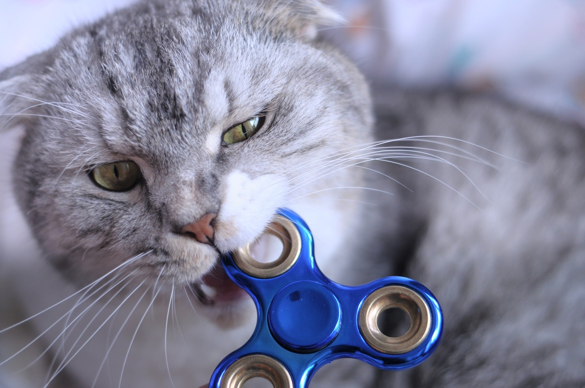 Sensory toys for adults with autism, ADHD, and anxiety. Cat playing with a fidget spinner.